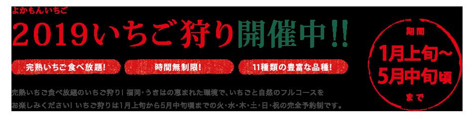 完熟いちご食べ放題福岡県うきは市のイチゴ狩り