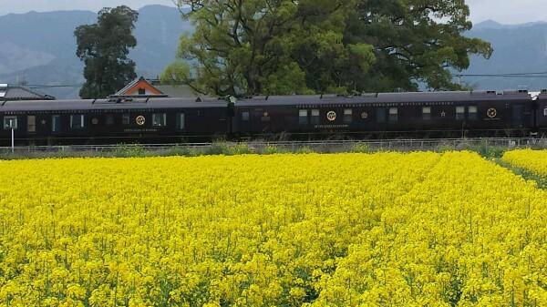 ななつ星列車と菜の花