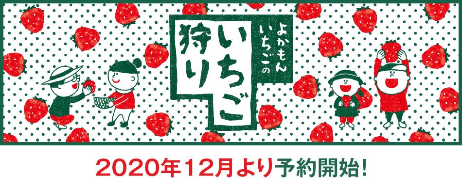 福岡県うきは市よかもんいちごのイチゴ狩り